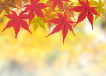 10月22日(土)16:00からは月に1度のグループ相談会です