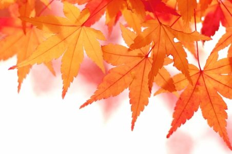 秋のご入会キャンペーンまもなく終了します!